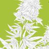 Logo Roxana Aguirre - Cultivo Cannabis