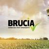 Logo Summit Agro presenta Brucia, tecnología de rescate para tu maíz