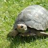 Logo Un Viaje con Vo(z): El mundo de las tortugas (Lic. Alba Imhof).