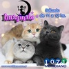 Logo Imaginalo Nº 105 2021 - #ImaginaloFelino