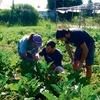 Logo Nicolás Borrelli, ingeniero agrónomo sobre de qué se trata la agroecología