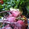 Logo Hortícolas Tarijeños producen bolsones de verduras en Colonia Caroya