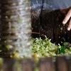 Logo Sabés lo que es el mosto en el mundo del vino?