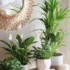 Logo Carol de Asesoramiento Mistico habla de plantas que energizan con Noe Novillo x la 106.1!!!