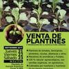 Logo VENTA DE PLANTINES ORGÁNICOS EN EL CENTRO DE NQN: Aldo González en #AFONDO