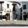 Logo Honor, poder y clientelismo en un pueblo de las sierras andaluces. Hoy: Pitt-Rivers en Grazalema