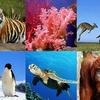 Logo Sandra Díaz sobre el informe del #IPBES que anuncia 1 Millón de especies en peligro de extinción.