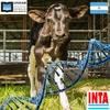 logo Investigadores argentinos lograron las primeras vacas que producen leche hipoalergénica