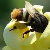 Logo Leonardo Galetto sobre el papel vital que tienen las #abejas según un estudio de Nature Sustainab