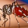 Logo Mosquitos: consejos útiles...