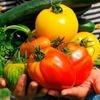 """Logo ¿Por qué los alimentos son tan caros en el """"granero del mundo""""?"""