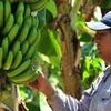 Logo Mercados populares comercializan bananas formoseñas a precios justos