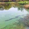 Logo Entrevista al Dr. Diego Frau sobre las cianobacterias de la Setubal y laguna  Bedetti