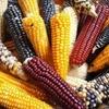Logo Agronomía construyendo soberanía alimentaria junto a la comunidad Qom.