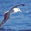 Logo Marco Favero explica el motivo por el cual los albatros están en estado de conservación preocupante