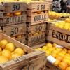 Logo La producción de naranjas en Argentina - Matías Longoni entrevista al agrónomo Juan Pablo Stivanello