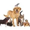 Logo Test ¿Necesitás una mascota?