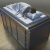 Logo Enhorabuena! Inventan una cama que podría salvar vidas en caso de terremotos