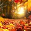 Logo Un Viaje con Vo(z): Baladas de otoño (columna de narración oral escénica).