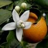 Logo El lado B de Naranjo en Flor por Walter Alegre