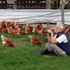 Logo Bernardo Kojic, M.V. y Asesor de producción avícola sin jaulas en Argentina