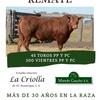 Logo A todo Limangus el 20/8, Remante Anual de La Criolla y Manolo Gaucho