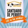 Logo Derecho Animal - Como Perros y Gatos - Nº 186 - 17-09-2016