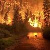 Logo Rocio Vásquez sobre los Incendios Forestales en el Amazonas que superan los 70.000 en el año.