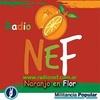 Logo HOY ES MIERNES - PROGRAMA DEL VIERNES 19 DE AGOSTO POR RADIO NEF