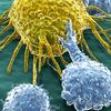"""Logo """"Inmunoterapias, galectinas y la promesa de un nuevo Nobel argentino"""""""