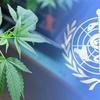 Logo OMS sugiere apartar al cannabis dentro de la lista de drogas dañinas