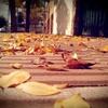 """Logo """"Nosotros, los cordobeses"""" Hoy: """"... canciones que reciben al otoño en La Docta..."""""""