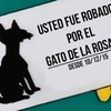 "Logo Macri Gato, la definición ""Tumbera"""
