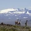 Logo Arturo Puricelli opina sobre el proyecto de ampliación del Parque Nacional Patagonia