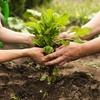 Logo Piden la reglamentación de la ley que promueve la agroecología y limita las fumigaciones en La Pampa
